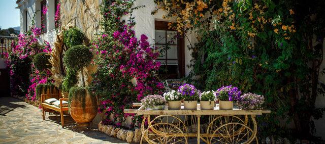 Buganvilla-corner-with-flower-trolley